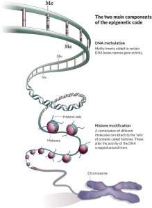 DNA and Epigenetics